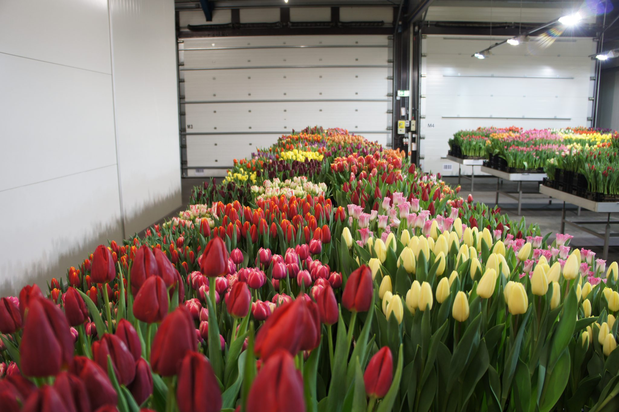 Tulip Trade Event 2020 impression